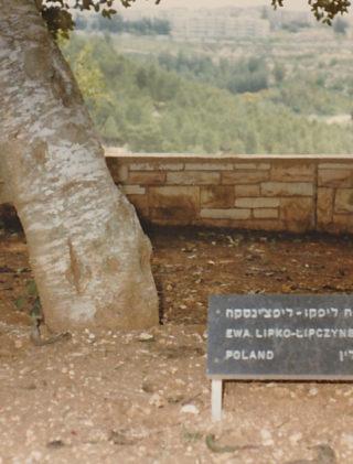 Tabliczka przy drzewie Eweliny Lipko-Lipczyńskiej w Instytucie Yad Vashem, Jerozolima 1980